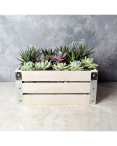 Amesbury Succulent Crate, floral gift baskets, gift baskets, succulent gift baskets