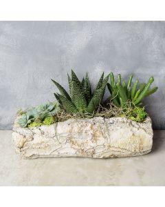 Succulent Rock Garden, floral gift baskets, gift baskets, succulent gift basket