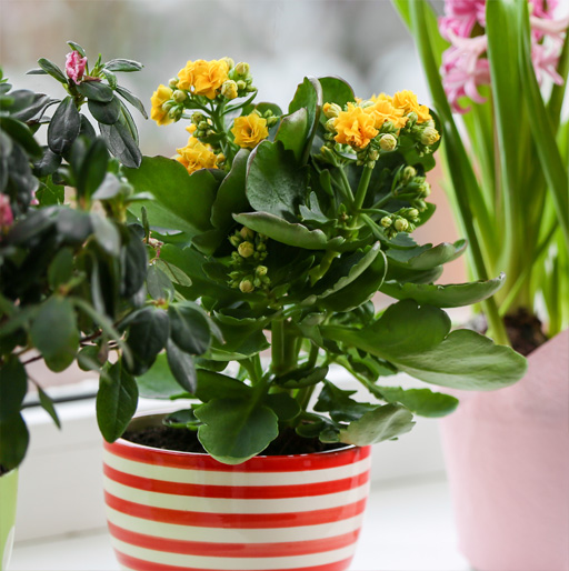 Our Potted Plants Gift Ideas for Mom