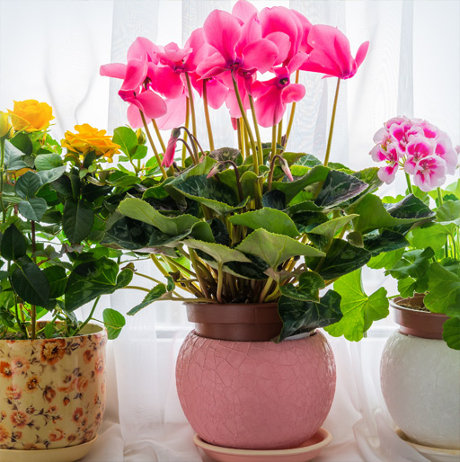 Our Potted Plants Gift Ideas for Dad & Kids